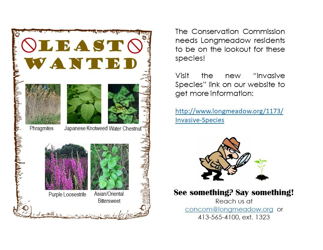 Invasive Species Flyer