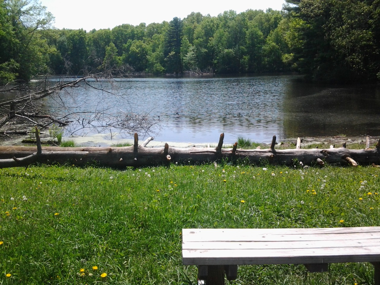 Turner Park Bench Pond Deadwood